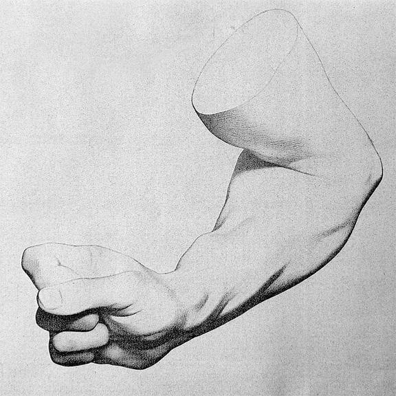 flexed arm bargue